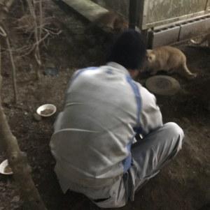 野良猫の餌付け禁止のマンションなのに、10匹もいる野良猫に餌をやるバカ男